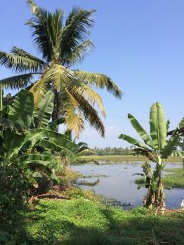Cocotiers, rizières et backwaters à Kumarakom