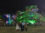 Arbre illuminé à Kochi