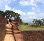 Filets pour êvacuer suite à une attaque de guêpes à Sigiriya