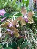 Bouquet d'orchidées Peradenyia