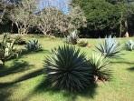 Jardin de cactus Peradenyia