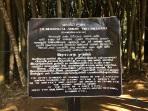 Info bambou Peradenyia