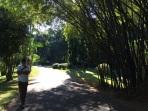 Passage sous les bambous Peradenyia