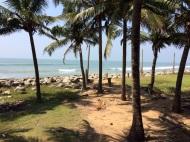 Vue du train vers Colombo