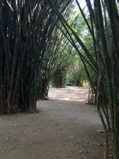 Sous bois de bambous Peradenyia