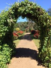 Allée fleurie à Peradenyia