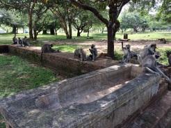 Bain thérapeutique Anuradhapura