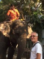Éléphant devant le temple de Ganesha
