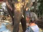 Éléphant devant le temple de Ganesha à Puducherry
