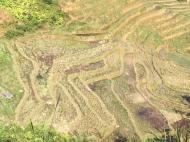 Rizière dorée après la récolte à Xa Tà Van