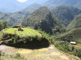 Vue d'une rizière, en contrebas d'un village Hmong, Sapa