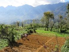 Le travail dans les champs, Sapa