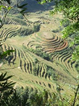 Vue sur les rizières près de Sapa