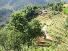 Cultures de riz sur le flanc de la montagne