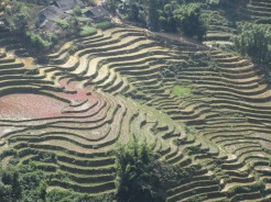 Les rizières sculptent la montagne.