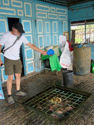 Nourrir les poissons d'élevage, Chau Doc, Vietnam