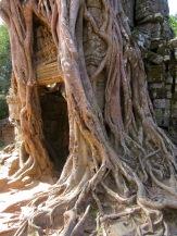 Un banian a élu domicile autour de la porte d'entrée de Ta Som, Angkor, Cambodge