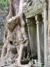 La nature reprend ses droits et c'est magnifique, Preah Khan, Angkor, Cambodge