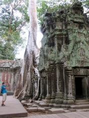 À la découverte de Ta Phrom, la mystérieuse, Angkor, Cambodge