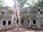 La nature à Ta Phrom, belle cohabitation, Angkor, Cambodge