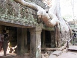 Ta Phrom, Angkor, Cambodge