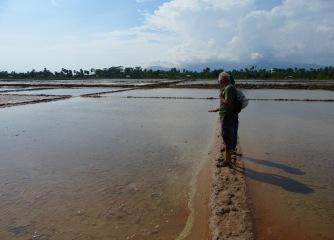 Notre guide explique les étapes de la préparation du marais salant pour la production de sel, Kampot, Cambodge