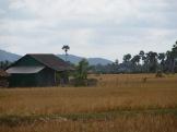 Campagne près de Kampot, Cambodge