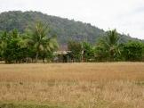 Dans la campagne près de Kampot, Cambodge