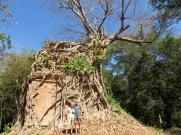 Plus d'une centaine de temples sont disséminés sur le site de Sambor Pre Kuk, mais la nature a repris ses droits, Cambodge