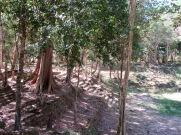 Des vestiges de Sambor Pre Kuk, cette ancienne capitale du Chenla au 7e siècle sont visibles partout dans cette forêt, Cambodge