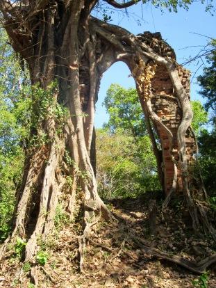Un arbre s'est accroché à une structure de brique pour grandir, Sambor Pre Kuk, Cambodge
