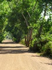 Une route dans la campagne près de Kompong Thom, Cambodge
