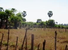 Paysage calme dans la campagne de Kompong Thom, Cambodge
