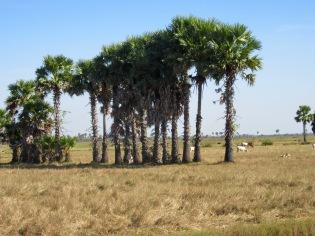 Un après-midi à la campagne, région de Kompong Thom, Cambodge