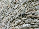 Un petit iguane se prélasse sur l'un des murs du Castillo, presque invisible à travers les pierres grises. Mayapan, Yucatán, Mexique.
