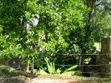 Chen Mul, un des cénotes de Mayapan, voisin du Castillo, était l'une des sources d'eau de la ville fortifiée. Yucatán, Mexique.