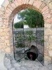 La région recèle plusieurs cénotes, ces réserves d'eau souterraines qui permettaient à la population de survivre dans un climat où les pluies étaient rares. Celui-ci est dans la ville de Mani, Yucatán, Mexique.