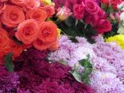 Les fleurs fraîches au marché Ignacio Ramírez, un régal pour les yeux. San Miguel de Allende, Guanajuato, Mexique.