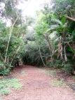 Un sentier dans la jungle nous permet d'atteindre la principale source d'eau de Altun Ha. Belize District, Belize.