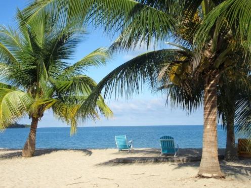 Sur la plage de Placencia, un iguane se fait dorer au soleil, bien étendu sur une branche de l'un de ces deux palmiers. Le voyez-vous? Il est quand même assez gros...Stann Creek District, Belize.