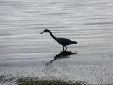 La marée est basse et c'est l'heure de la pêche devant le restaurant le Pelican à Punta Gorda. Toledo District, Belize.