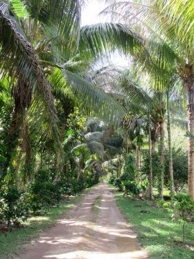 Nous avons choisi de faire la visite du jardin d'épices à pied avec le guide. Une bonne décision...les points de vue en valaient la peine. Toledo District, Belize.