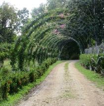 Dès notre entrée au Spice Garden, nous sommes conquis par la végétation. Toledo District, Belize.