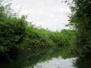 Le trajet en lancha à travers la mangrove pour se rendre à Aguateca est vraiment agréable. La végétation est dense. Il est possible d'observer des oiseaux et quelques crocodiles. Petén, Guatemala.