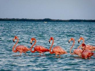 Les flamants de Rio Lagartos sont presque de couleur orangée, Yucatán, Mexique.