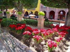 Le jardin principal de San Miguel de Allende est aussi appelé El Jardin. Pour le temps des Fêtes, il s'est paré de poinsettias. Guanajuato, Mexique.