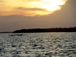 Nous apercevons de loin des flamants roses qui s'avancent vers nous sous le soleil couchant de Rio Lagartos, Yucatán, Mexique.