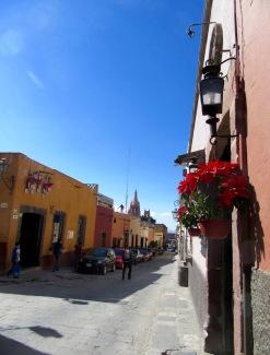 Un peu partout dans la ville, les poinsettias font leur apparition pour le plus grand plaisir des yeux, San Miguel de Allende, Guanajuato, Mexique.