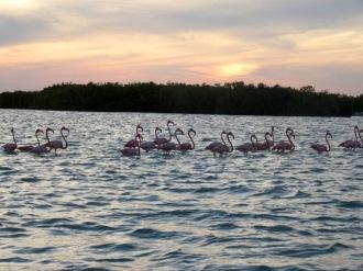 Les eaux peu profondes en face du village de Rio Lagartos permettent aux flamants roses de se nourrir. Yucatán, Mexique.