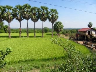 Une belle rizière au détour du chemin sur la route de Chhlong, Cambodge.